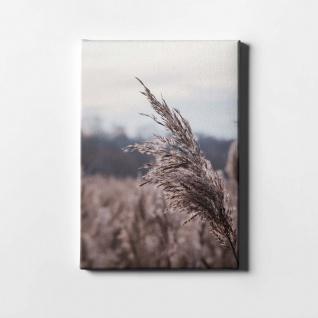 Schilf Natur Pflanze Leinwand L0405