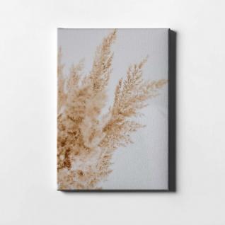Schilf Natur Pflanze Leinwand L0404