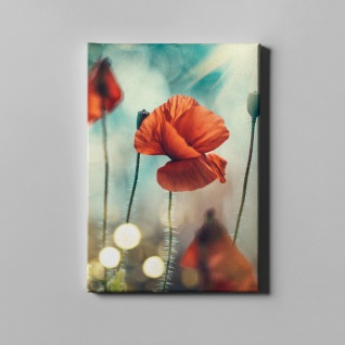 Kornblume Blume Natur Leinwand L0389