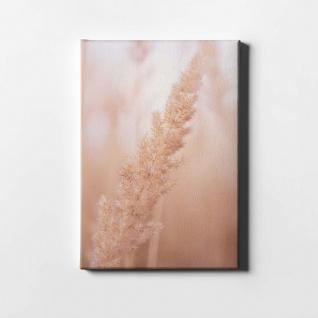 Schilf Natur Pflanze Leinwand L0409