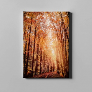 Wald Bäume Herbst Natur Leinwand L0359