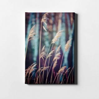 Schilf Natur Pflanze Leinwand L0406