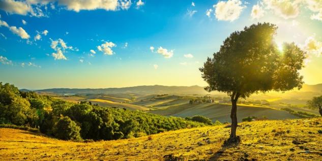 Felder Landschaft Sonne Sommer Tasse T0813 - Vorschau 2