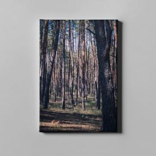 Wald Bäume Natur Leinwand L0384