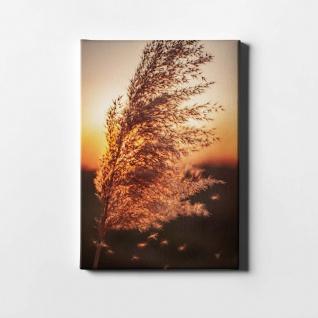 Schilf Natur Sonnenuntergang Pflanze Leinwand L0402
