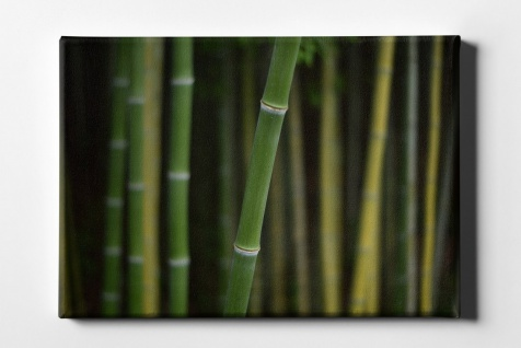 Bambus Fokus Leinwand L0167