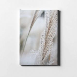 Schilf Natur Pflanze Leinwand L0401