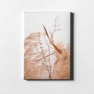 Schilf Natur Pflanze Leinwand L0408