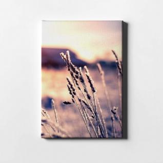 Schilf Natur Sonnenuntergang Pflanze Leinwand L0403