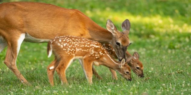 Reh Rehkitz Familie Tiere Wildnis Tasse T0389 - Vorschau 2