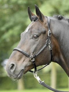 Busse Halfter Leder Sparkle Pony schwarz/Strass-silber