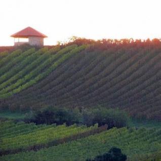 Weißwein Rheinhessen Saphira Weingut Becker Spätlese lieblich ( 3 x 0, 75 l)
