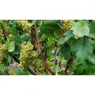 Weißwein Nahe Weingut Roland Mees Kreuznacher Rosenberg Qualitätswein halbtrocken (21 x 0, 75l) - Vorschau 5