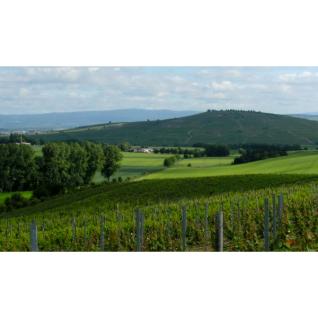 Weißwein Nahe Weingut Roland Mees Kreuznacher Rosenberg Qualitätswein halbtrocken (21 x 0, 75l) - Vorschau 3