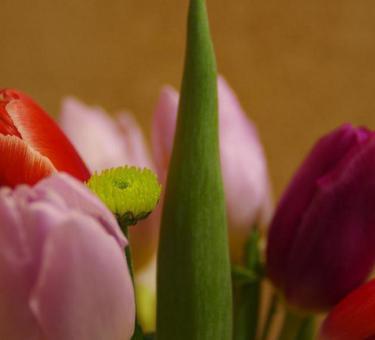 Blumen-Kunst-Werkstatt