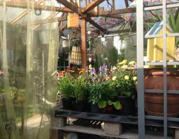 Blumen-Lore in Lauf an der Pegnitz