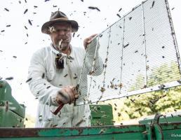 Imkerei Das Bienenkörbchen in Lauf an der Pegnitz