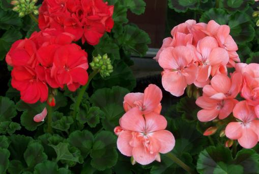Sommerpflanzen