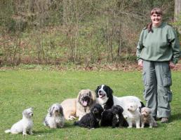 Hundeschule Frankenalb in Simmelsdorf