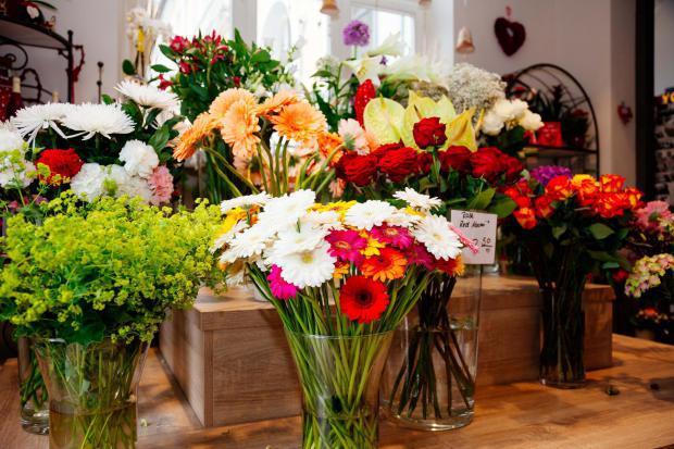 Frische Schnittblumen