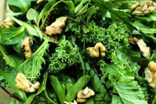 Veranstaltung: Veganes Überraschungsmenü und Slow Food-Weine