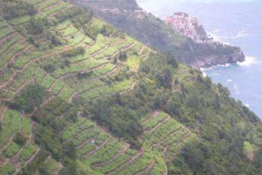 Weißwein: Cinque Terre 2017 - Cooperativa 5 Terre (Ligurien - Norditalien)