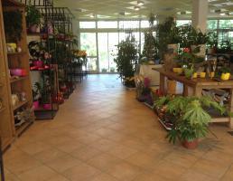 Blumen Pappenheimer Friedhofsgärtnerei und Blumenfachgeschäft in Regensburg