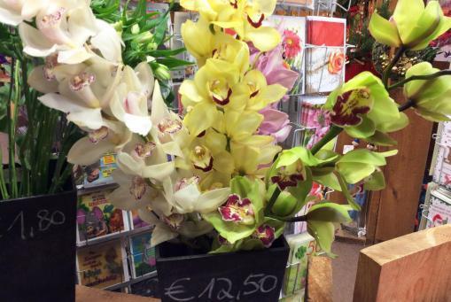 Orchideen als Schnittblumen