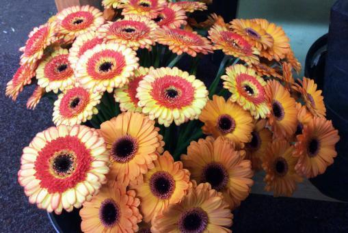 Schnittblumen von besonders hochwertiger Qualität