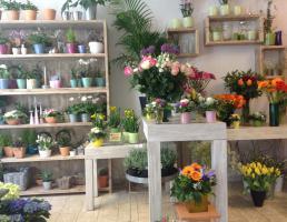 Die BlumenWahl in Regensburg